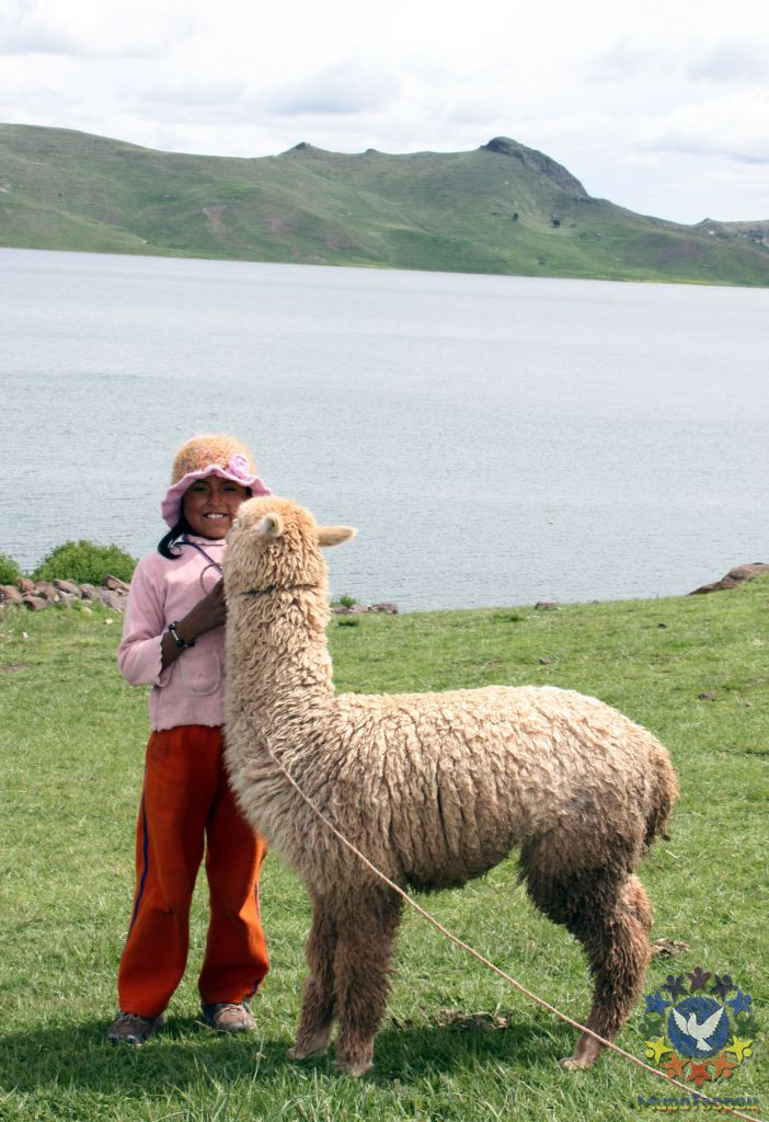 знакомство с альпаками москва