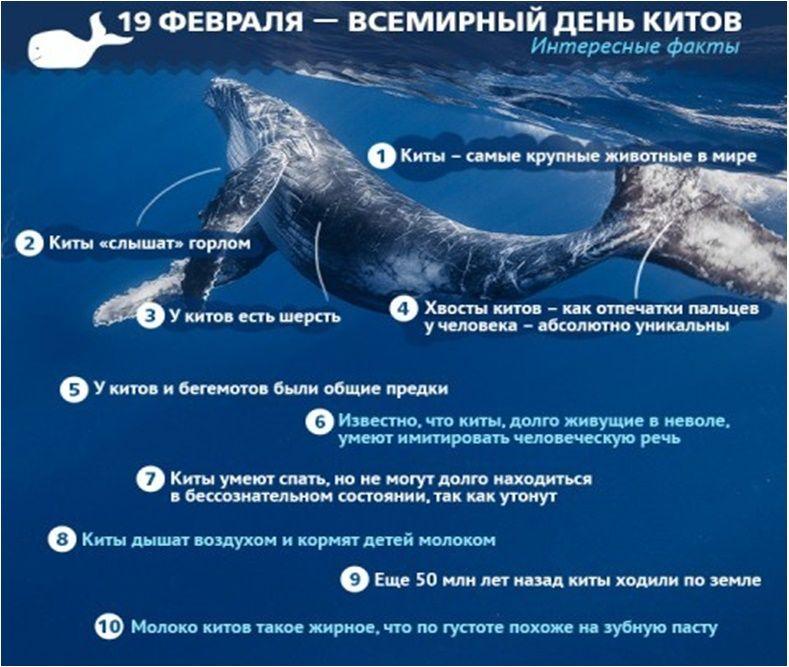 Сценарий всемирный день китов